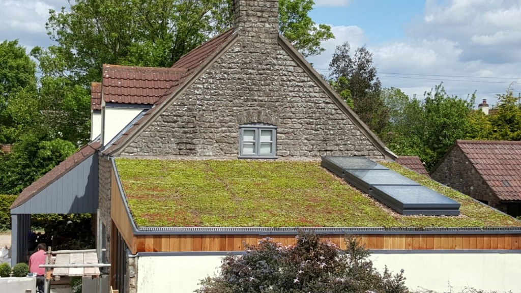 Green Roofs Flat Roofs Bristol