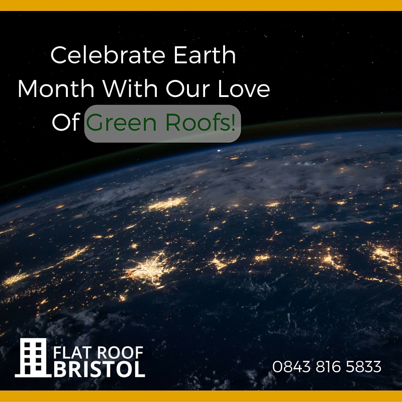 Our Love of Green Roofs