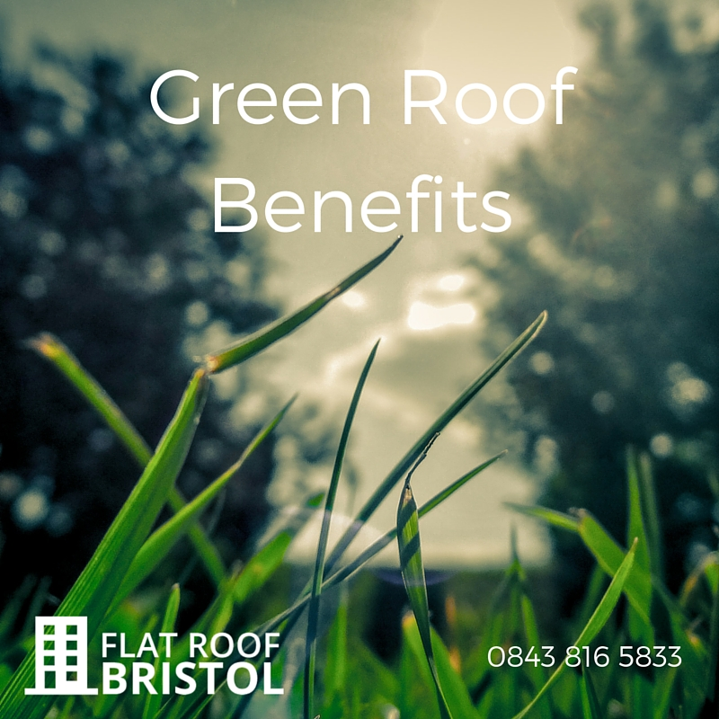 Green Roof Specialists